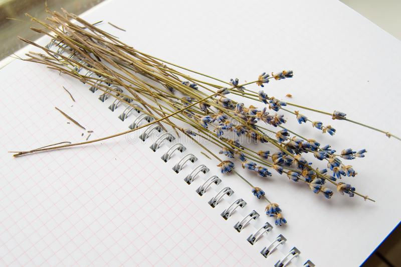 Dry lavender flowers lie on an open notebook, close-up stock images