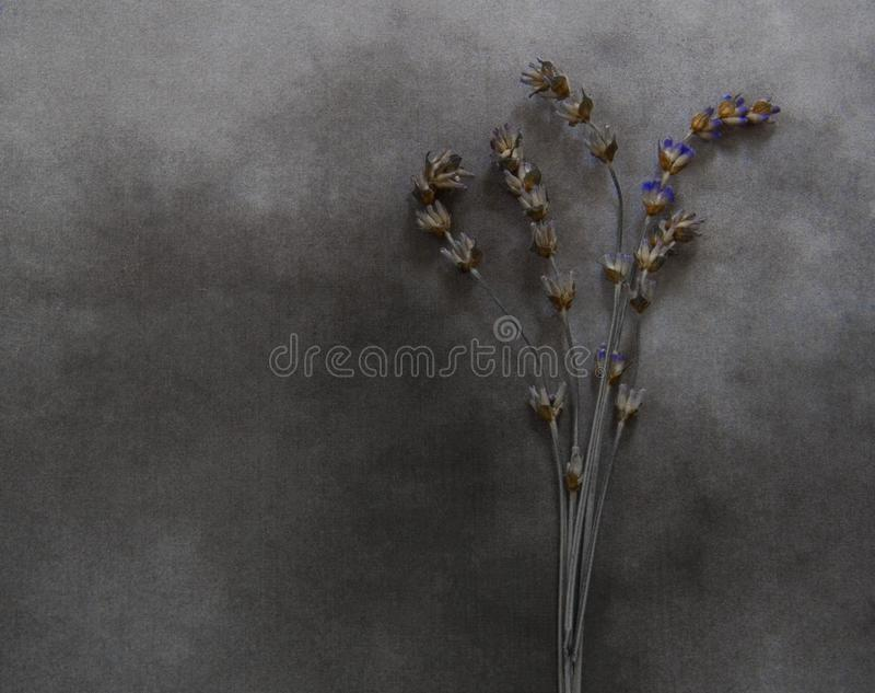 Dry lavender on marble - deepest sympathy. Dry lavender on marble - condolence card, with deepest sympathy royalty free stock photography