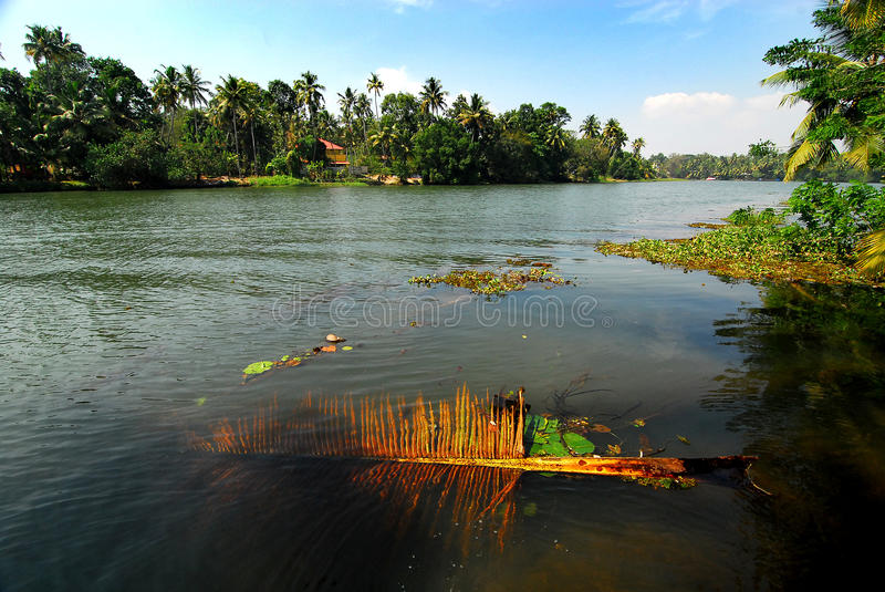 Download Dry Leaf stock image. Image of kerala, india, asia, environment - 28458149