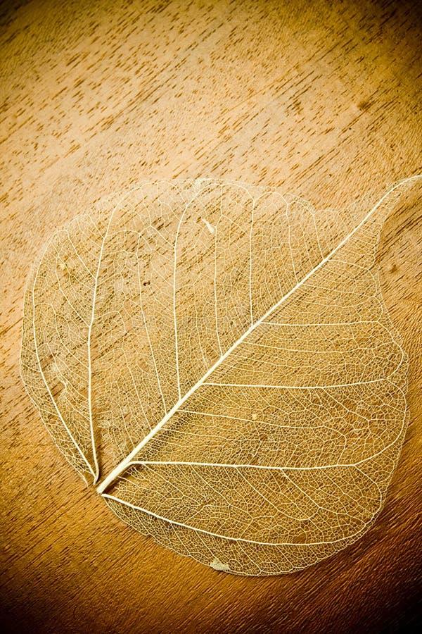 Dry leaf. Still life on wood stock photos
