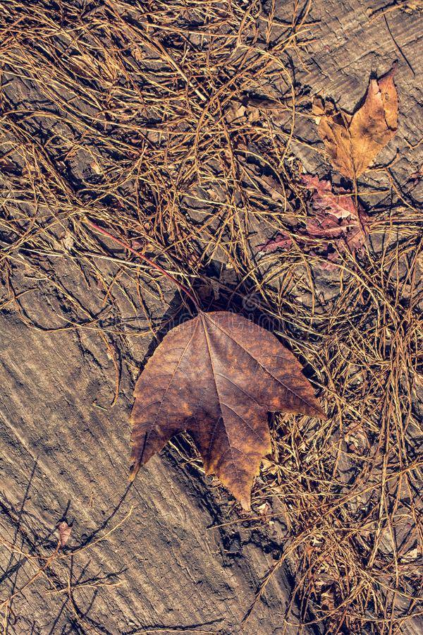 Dry leaf as an Autumn background royalty free stock images