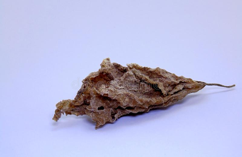 Dry leaf beauty of nature stock image