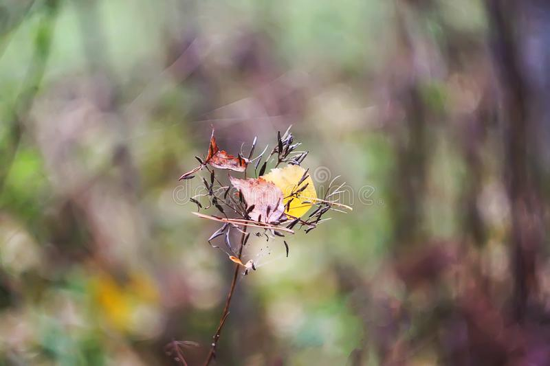 Dry leaf on nature background in autumn forest in november. Dry leaf on blurred nature background in autumn forest in november royalty free stock photography