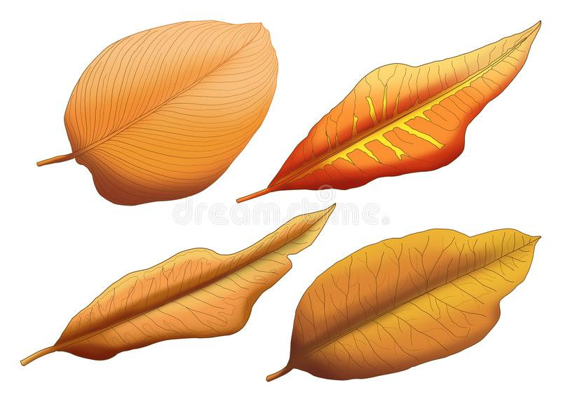 Dry leaf Brown paint stock illustration