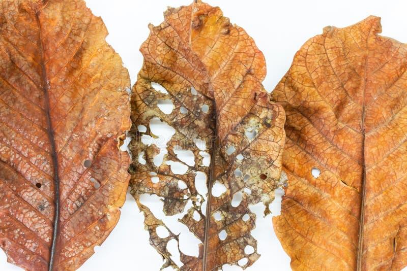 Dry leaf close up image royalty free stock photo