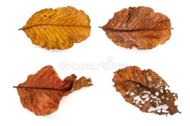 Dry leaf close up image stock photos