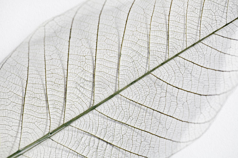 Dry leaf detail texture royalty free stock photography