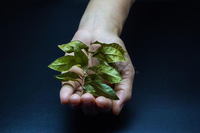 Dry leaf with a hand planting it. royalty free stock image