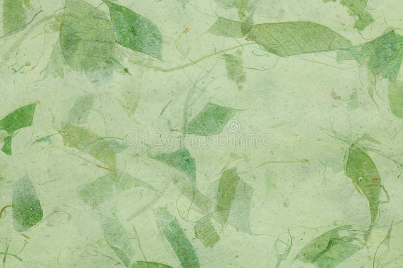 Dry leaf paper texture royalty free stock images