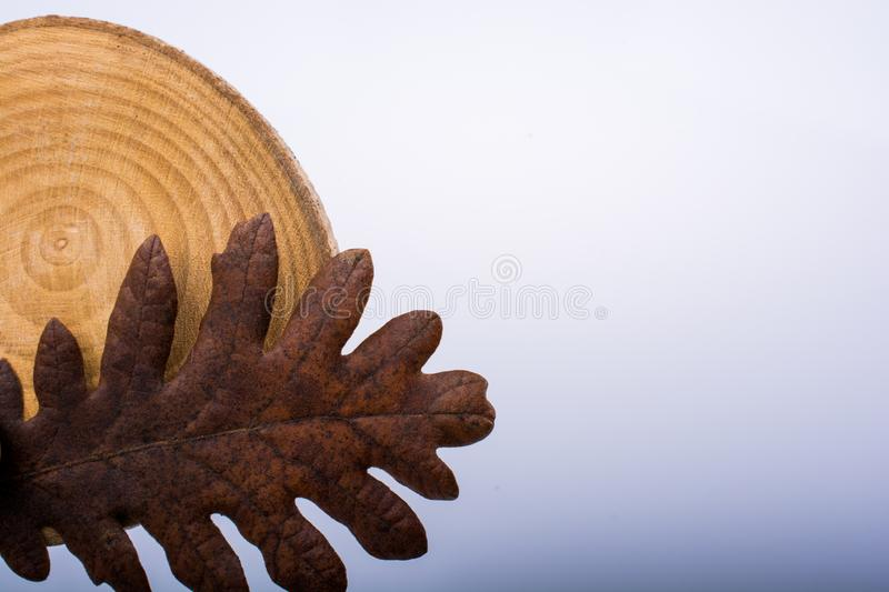 dry leaf on a piece of wood as an autumn background stock photo