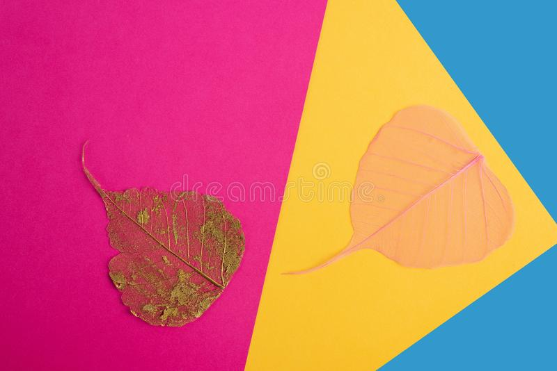 Dry leaf pink, yellow,blue,detail texture in colorfull background. Dry leaf pink, yellow,blue,abstract detail texture in colorfull background stock image