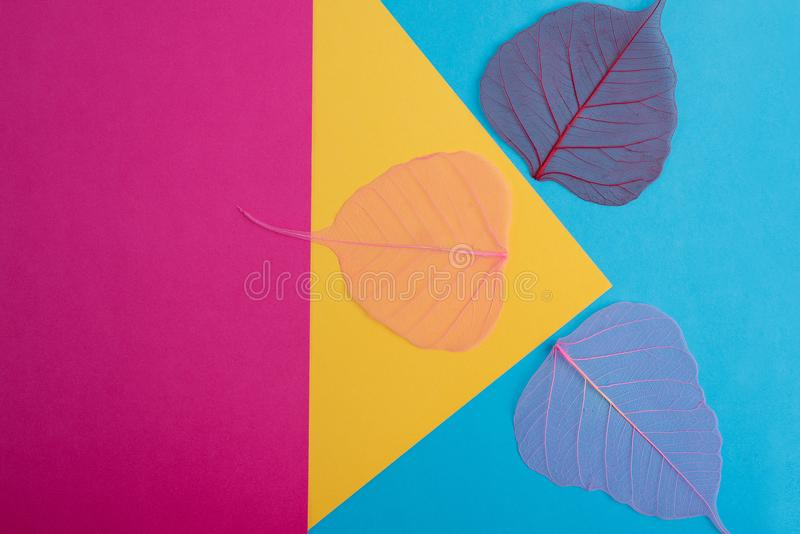 Dry leaf pink, yellow,blue,detail texture in colorfull background. Dry leaf pink, yellow,blue,abstract detail texture in colorfull background royalty free stock photo