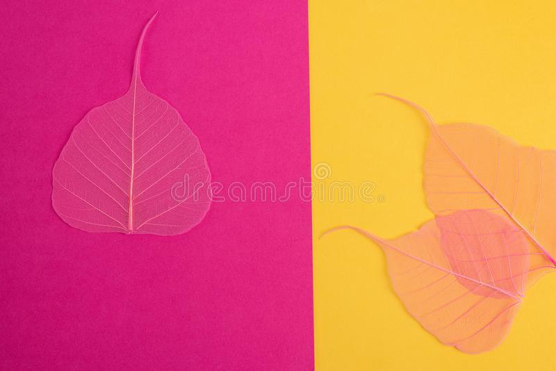Dry leaf pink, yellow,blue,detail texture in colorfull background. stock images