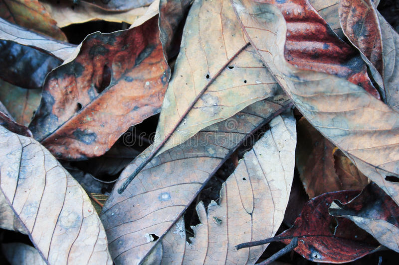 Dry leaf. Plants and trees stock image