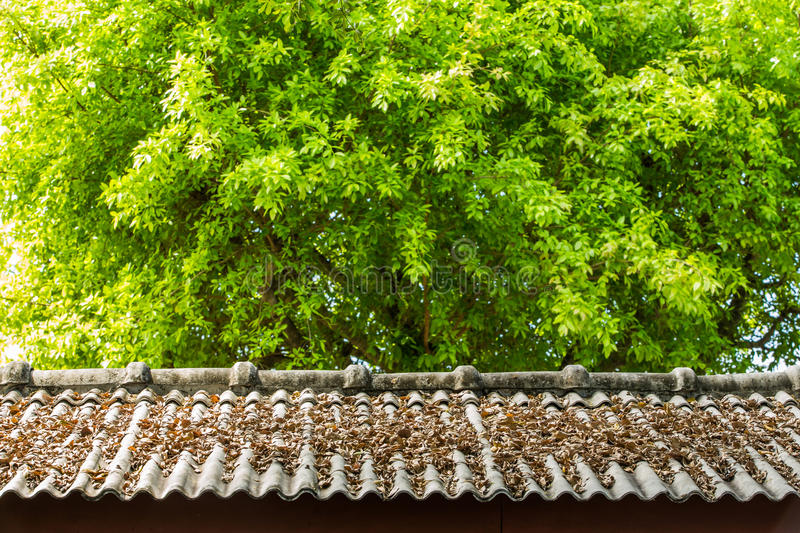 Download Dry leaf on roof top stock photo. Image of dark, top - 28408278