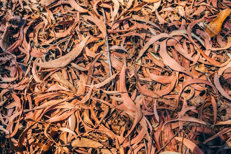 Dry leaf for texture stock photography