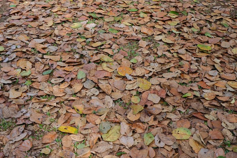 Dry leaf texture background stock photo