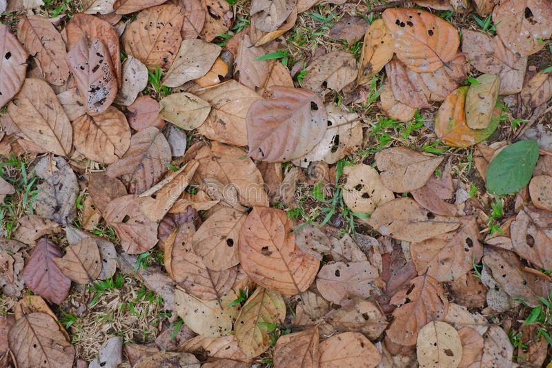 Dry leaf texture background stock photography