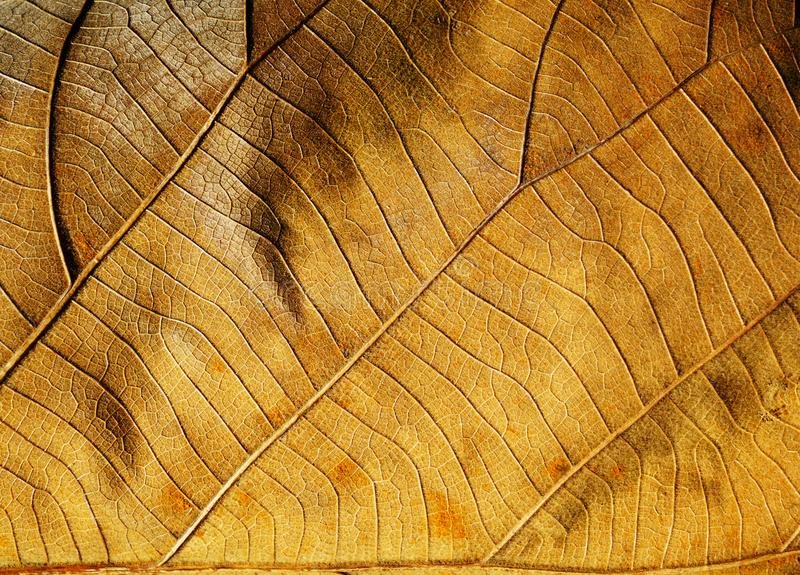 Dry leaf texture for backgrounds. stock image