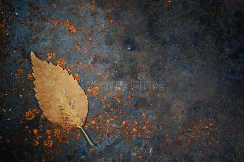 Dry leaf. Texture: the beauty of autumn leaves. Tree leaf on a rusty metal sheet royalty free stock photos