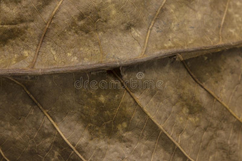 Dry leaf texture stock photography
