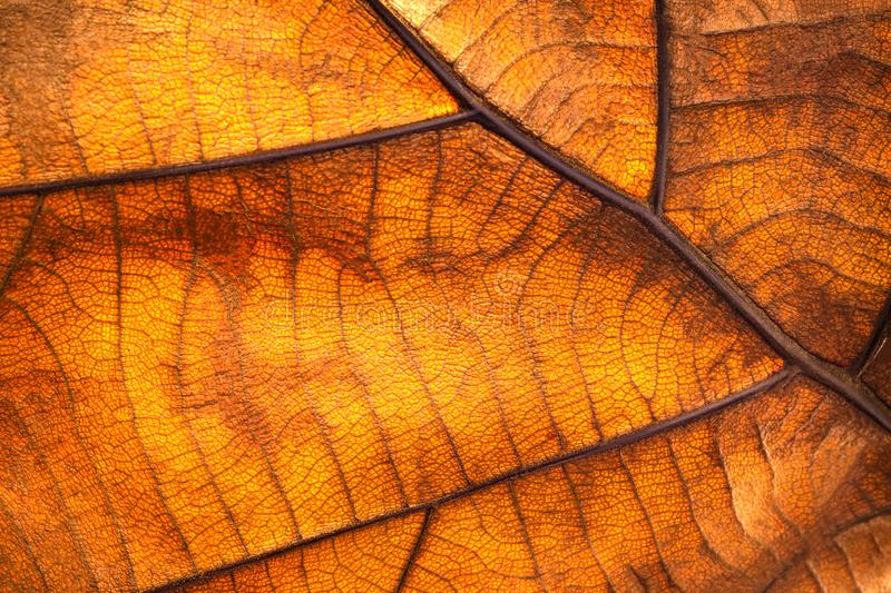 Dry leaf texture and nature background. Surface of brown leaves material stock photography