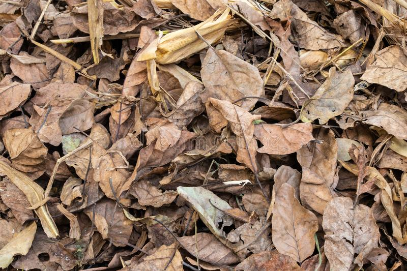 Dry leafs of trees lying in field royalty free stock photos