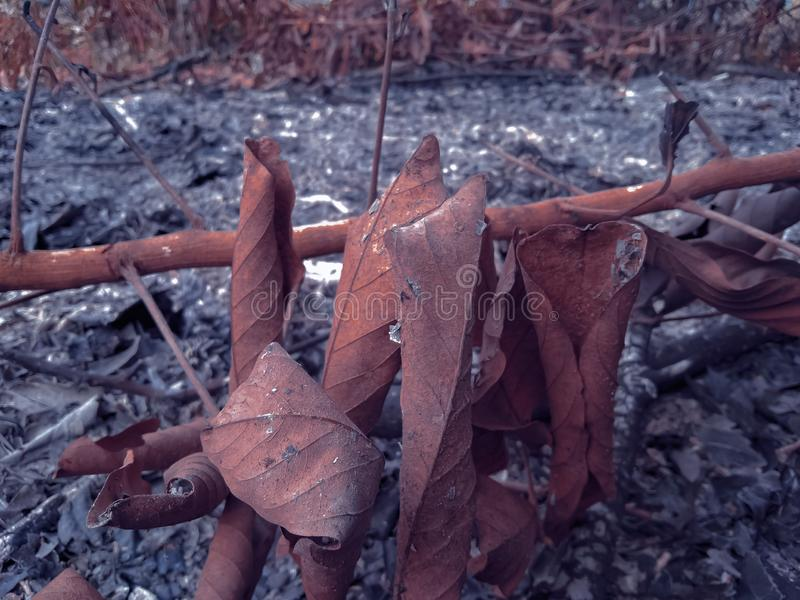 Dry leafy branches left over from burning rubbish. Ash, brown, nature royalty free stock images