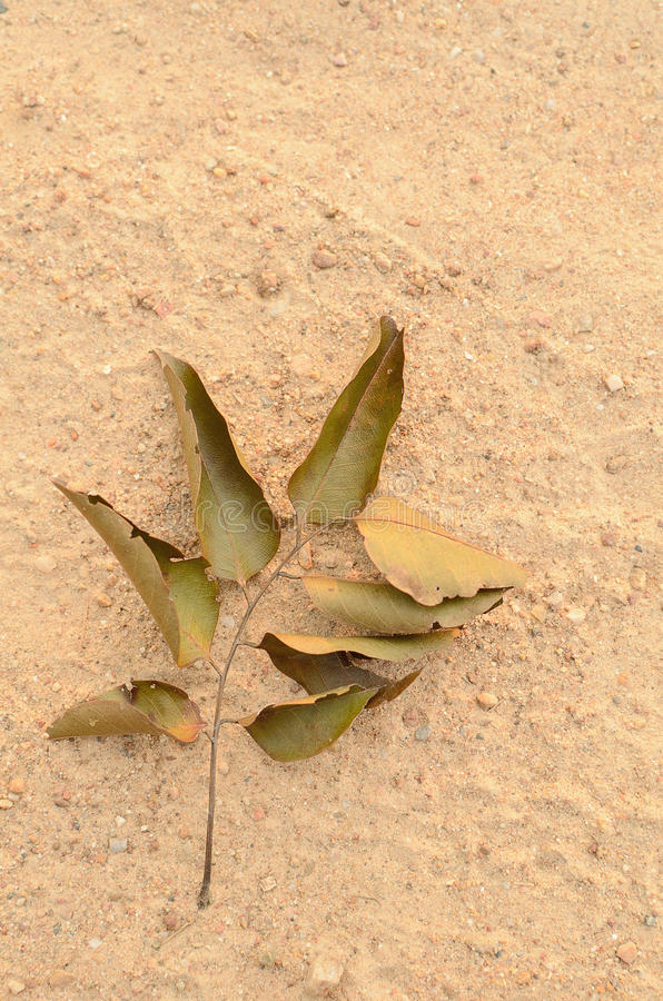 Dry leaves. On sand background stock photography