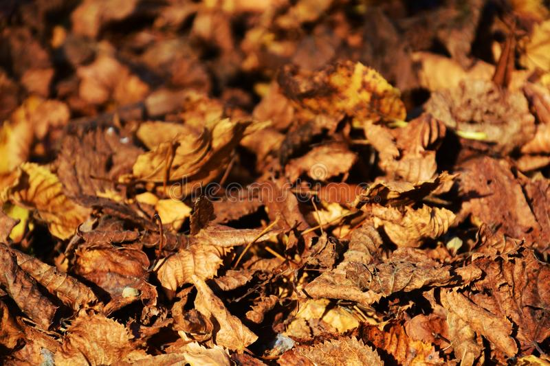 Dry leaves, autumn background royalty free stock image
