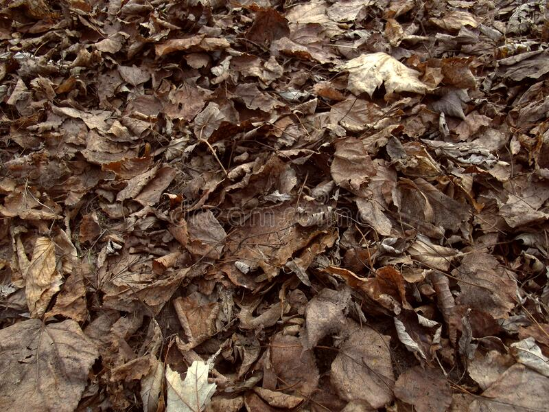 Dry leaves background. royalty free stock image