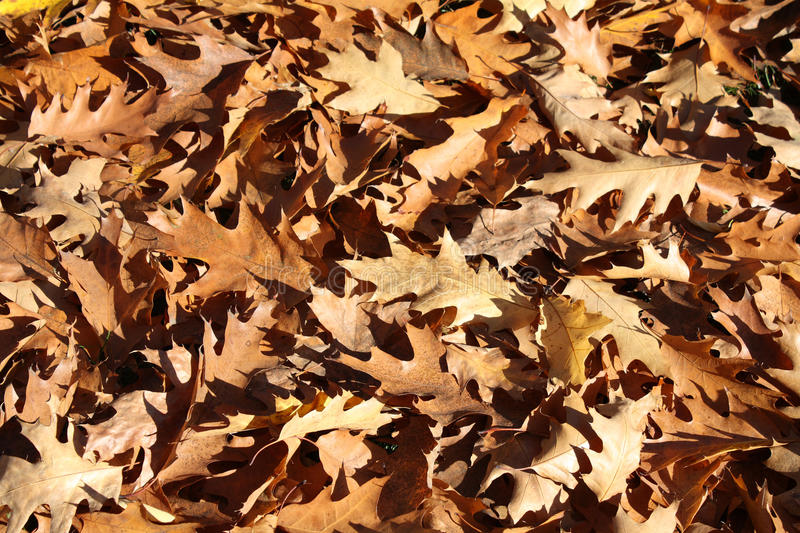 Dry Leaves Background Stock Photography