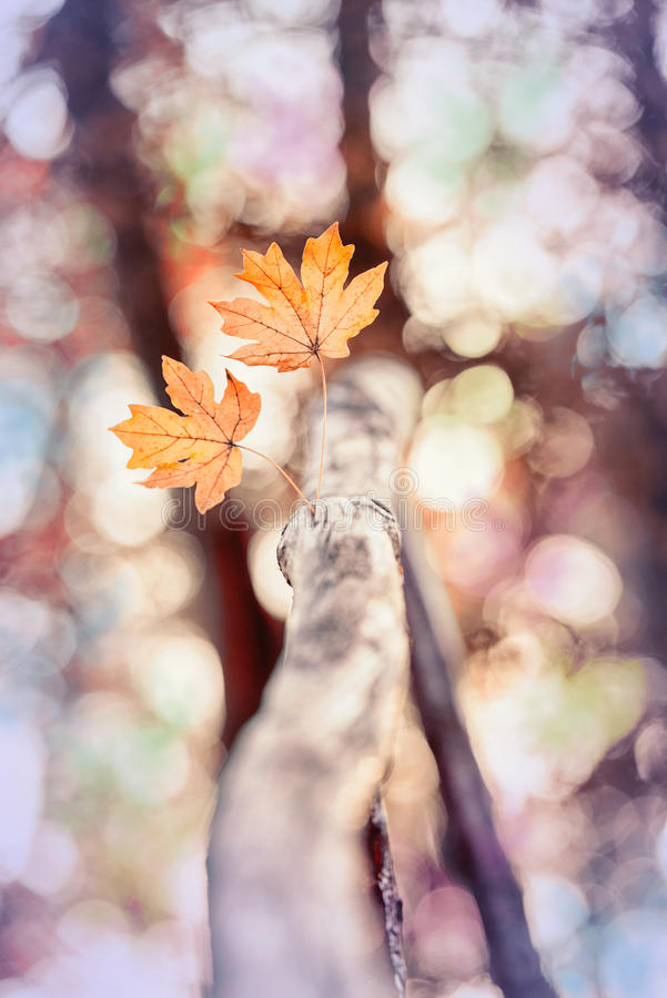 Dry leaves at the beginning of autumn stock photography