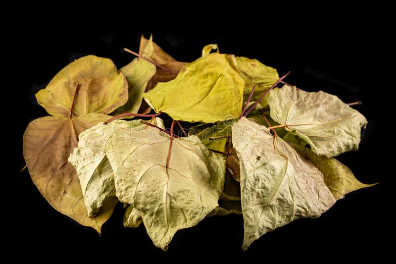 Dry leaves on a dark table. Large dried leaves gathered in the garden stock photos