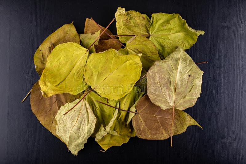 Dry leaves on a dark table. Large dried leaves gathered in the garden stock images