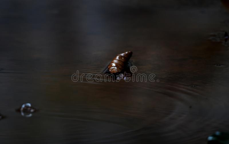 Dry leaves fall to the ground when it rains d stock photos