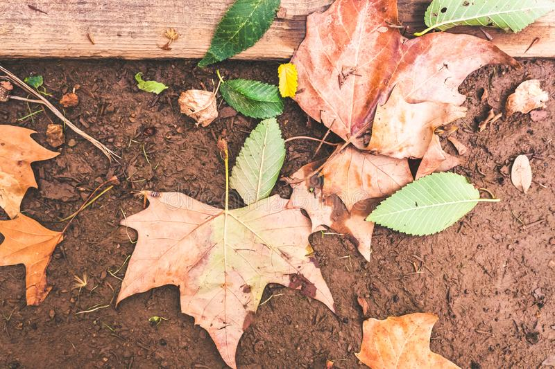 Dry leaves fallen on the ground one autumn afternoon royalty free stock photo