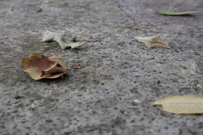 Dry leaves on the ground. Abstract, leaf, floor, backgrouns, texture, pattern, plant, environment, season, summer, spring, springtime royalty free stock images