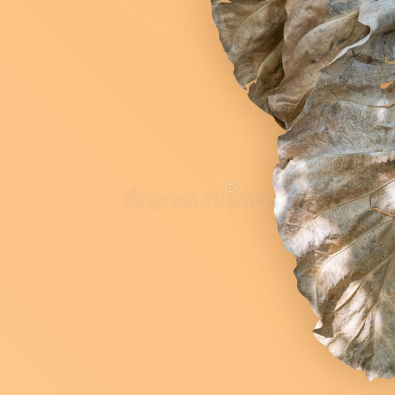 Dry leaves  isolated on gold background. Clipping path royalty free stock photos