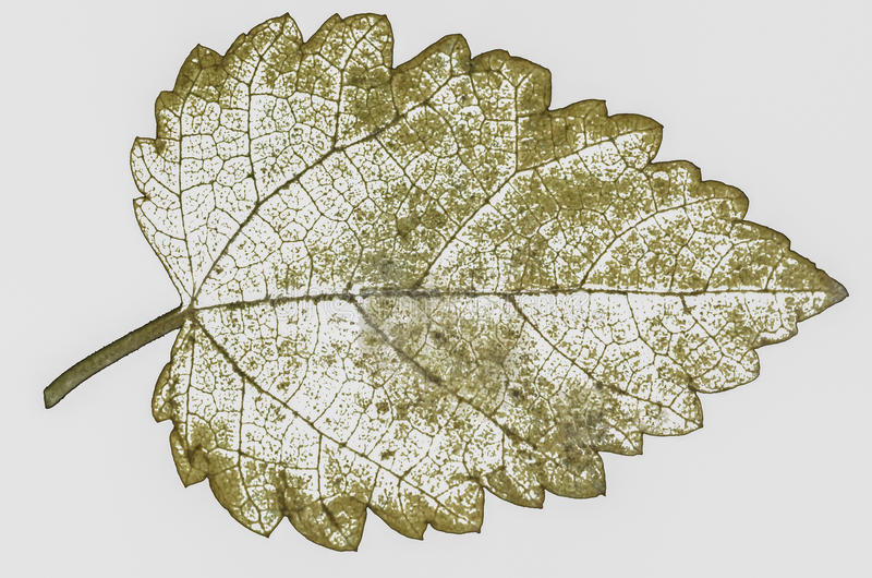 Dry leaves isolated stock photography