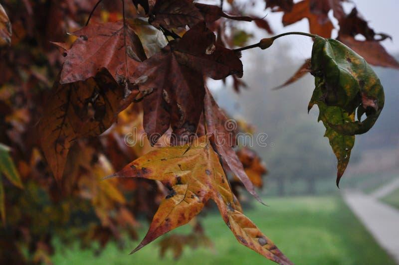dry leaves in November& x27;s time stock image