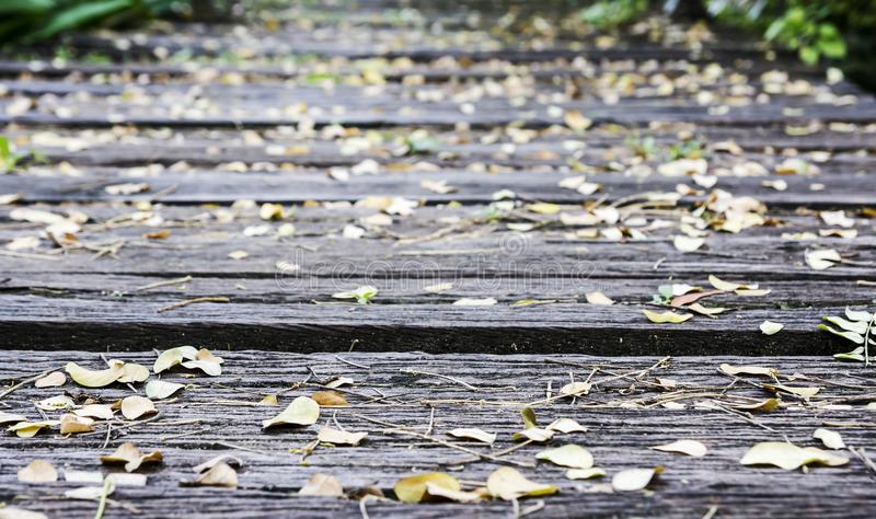 Dry leaves on old wood royalty free stock images
