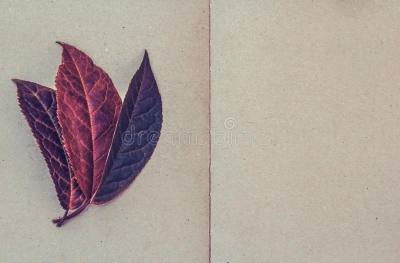Dry leaves on paper background. Dry leaves copy space. Paper background royalty free stock images