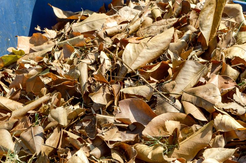 Dry leaves on plastic bin royalty free stock photography