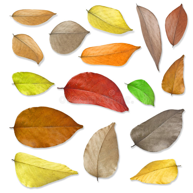 Free Dry Leaves Set . Stock Photo - 28414920