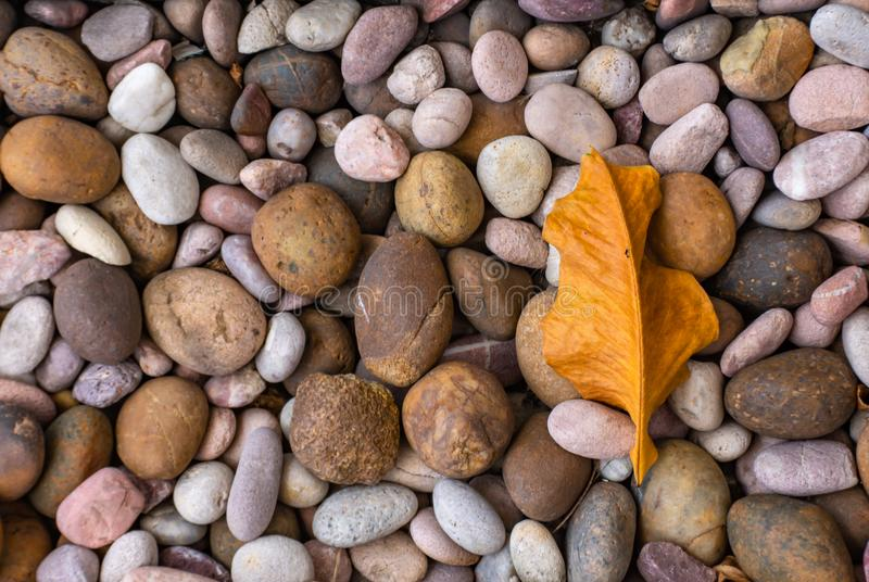 Dry leaves On the stones. Dry leaves On the stones , Thailand royalty free stock images