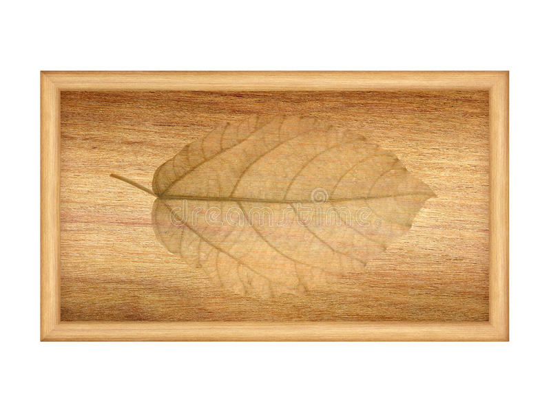 Dry leaves on wood texture stock image
