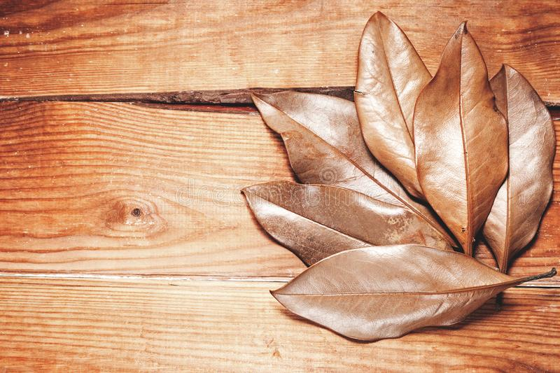 Dry leaves on a wooden background, royalty free stock images