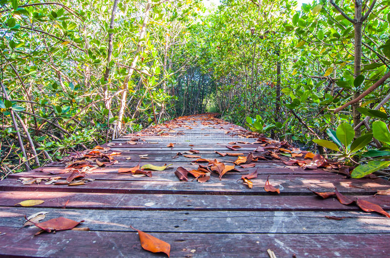 Dry leaves on a wooden walkway stock images