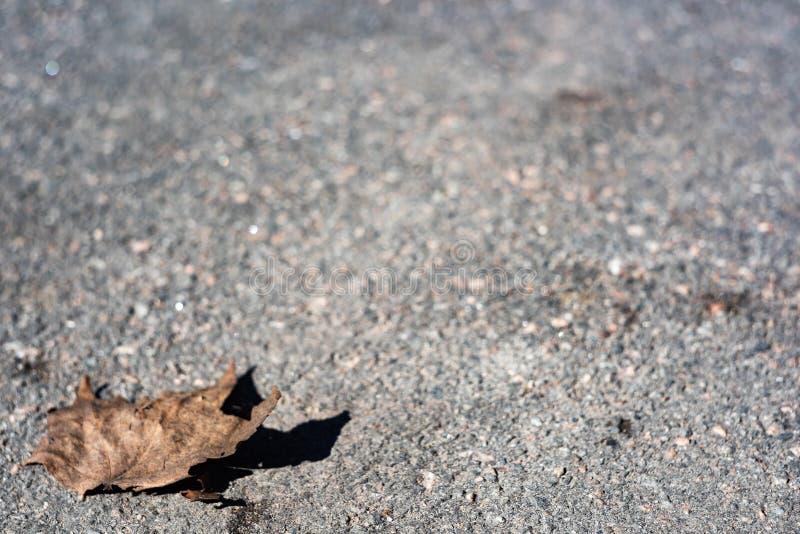 Dry lonely leaf on the asphalt stock photos